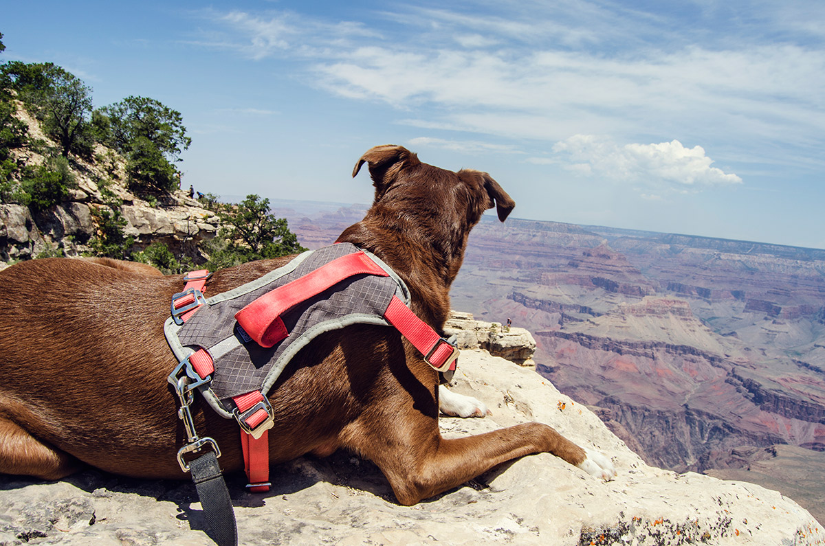 road trip america go west sisters camping driving south rim courage dog