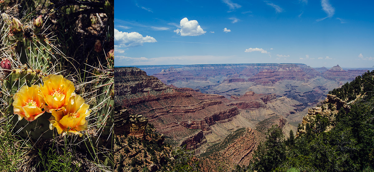road trip america go west sisters camping driving grand canyon arizona south rim